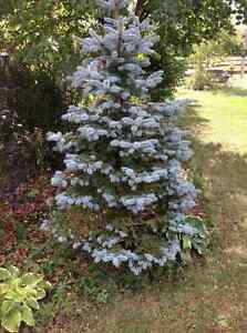 Various trees and shrubs  in Kemptville area
