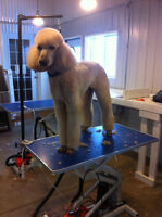 Professional Dog Grooming - Fall Promotion!