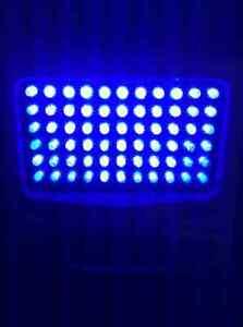 Lampe LED bleu luminotherapie Phillips golite P2