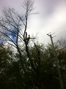 Tip Top Tree Removal and Services Kitchener / Waterloo Kitchener Area image 3