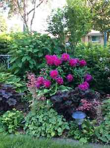 Large Perennial Sale - 1063 Sole Street