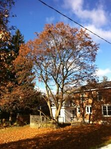 Tip Top Tree Removals and Services Cambridge Kitchener Area image 6