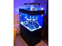 Marine fish tank 400ltr