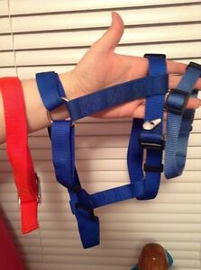 2 dog collars and a harness
