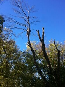 Tip Top Tree Removals and Services Stratford Kitchener Area image 2