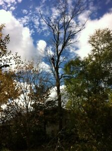 Tip Top Tree Removals and Services Stratford Kitchener Area image 6