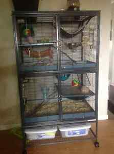 5 Female Rats and Pet Nation Two Level Cage