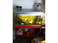 Fish tank full set up.
