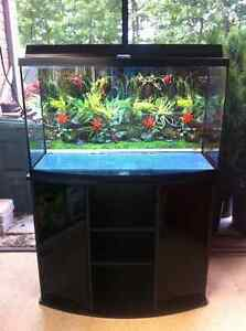 50 Gallon Curved Glass Aquarium with Stand, Plants, Equipment