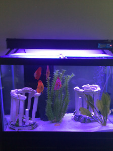 70 Gal tank, Stand, lids, 20 Gal Sump System