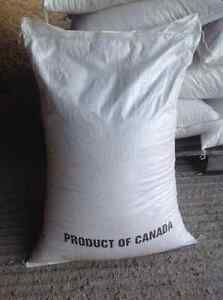 Oats for horses, goats, can deliver, buy 20 bags get 1bag free. Prince George British Columbia image 5