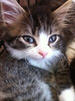 Cute kittens ready to go Sept 7