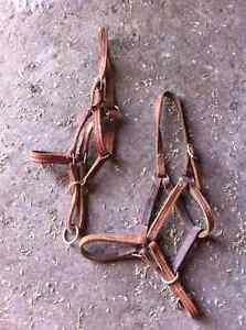 2 leather colt halters