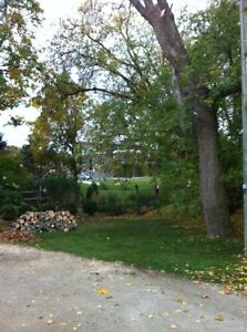Tip Top Tree Removal and Services Cambridge Kitchener Area image 5