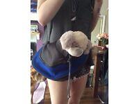 Very Small Dog/Kitten Pet Carrier/Bag