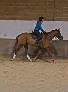 Flashy 4 year old OTTB with great mind and attitude Kitchener / Waterloo Kitchener Area image 3