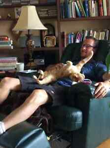 D and C's Dog and Cat Sitting Stratford Kitchener Area image 6