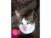 1yr old gorgeous male cat