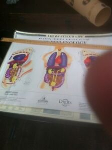 Hand and foot reflexology posters  Prince George British Columbia image 2