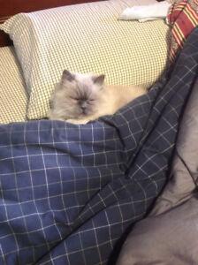 Pension pour chat dégriffé.