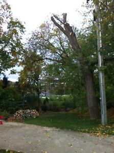 Tip Top Tree Removal and Services Kitchener / Waterloo Kitchener Area image 4