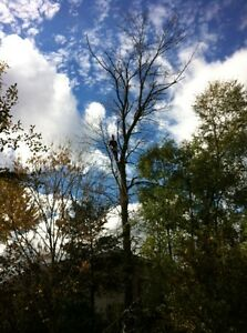 Tip Top Tree Removal and Services Cambridge Kitchener Area image 6