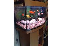 Fluval Fish Tank and Beech Unit