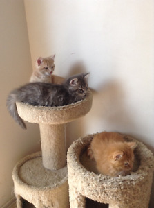 FREE KITTENS -All adopted Thank you for the interest