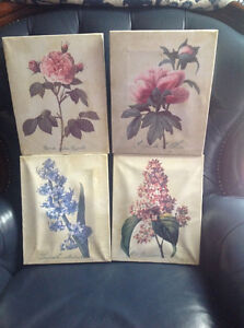 Set of 4 botanical flower frames
