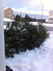 Trees for sale,
