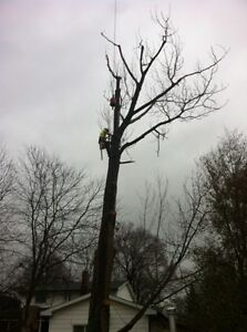 Tip Top Tree Removals and Services Cambridge Kitchener Area image 2