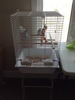 Budgie, cage and stand