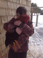 One Tame Rooster left for Adoption