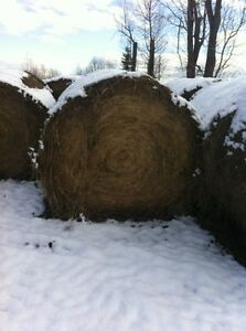 Cow Hay for sale Williams Lake Cariboo Area image 2