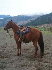 5 year old registered mare PRICE REDUCED