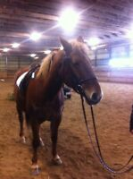 LOOKING FOR RIDING LESSONS NEAR BRUSSELS