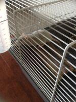 Rat à donner