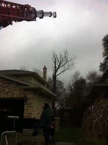 Tip Top Tree Removals and Services London Ontario image 3