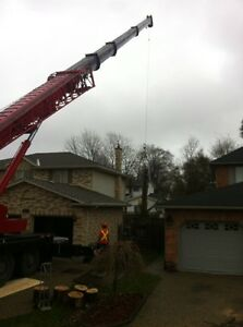 Tip Top Tree Removals and Services London Ontario image 4