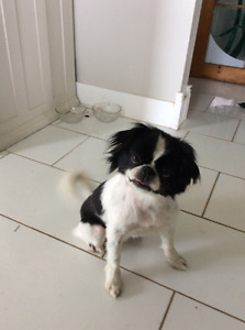 Small black and white dog.