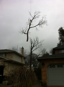 Tip Top Tree Removals and Services London Ontario image 1