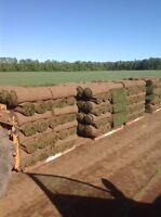 Farm fresh Premium Kentucky blue grass turf sod 720 sq delivery