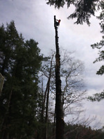 Professional tree care & property maintenance