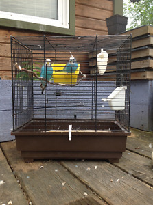 2 Budgies and a cage