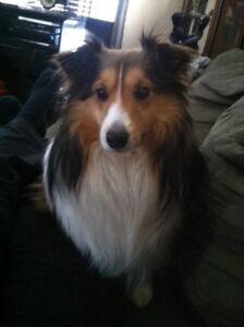 Missing Dog!! FOUND!!!!!