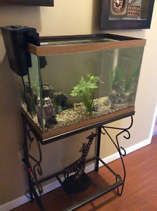 Two fancy goldfish, tank, access and stand