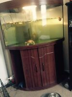 Two red eared slider turtles and 75 gallon tank