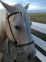 Dress up your horse in my handmade tack!