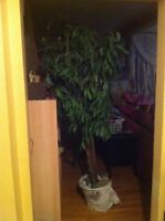 7 ft artificial tree