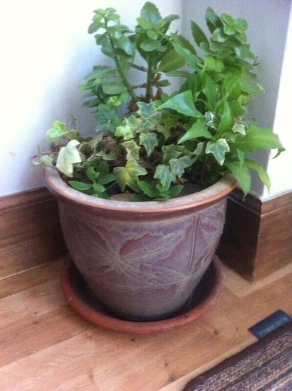 Clay decorative pot indoor plants clay saucer all in excellent condition in norwich - Indoor plant pots with saucers ...